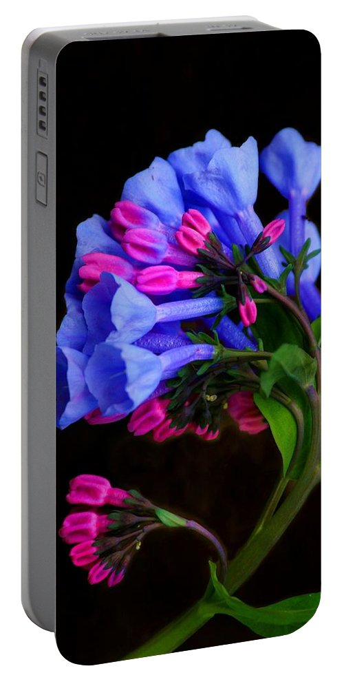Flower Portable Battery Charger featuring the photograph Spring Bluebells by John Absher