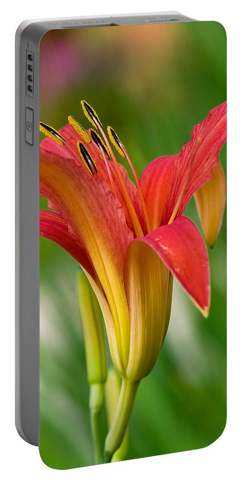 Flower Portable Battery Charger featuring the photograph Spring Colors by Jean-Pierre Ducondi