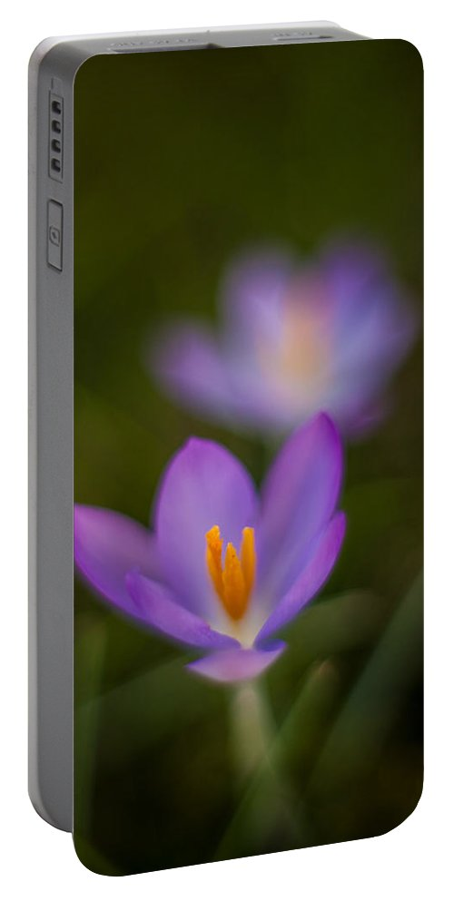 Crocus Portable Battery Charger featuring the photograph Spring Crocus Glow by Mike Reid