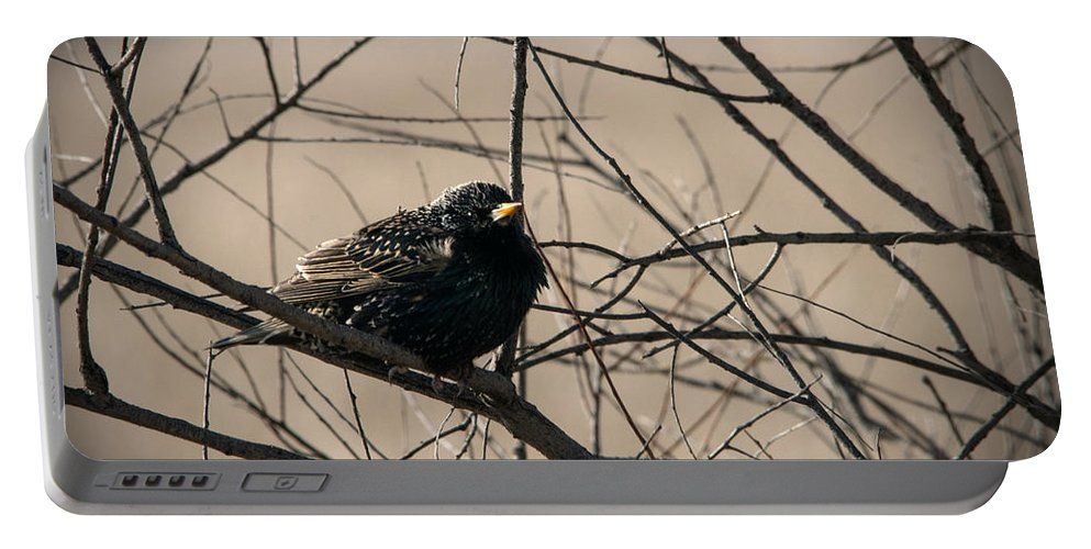 Bird Portable Battery Charger featuring the photograph European Starling by Jayne Gohr