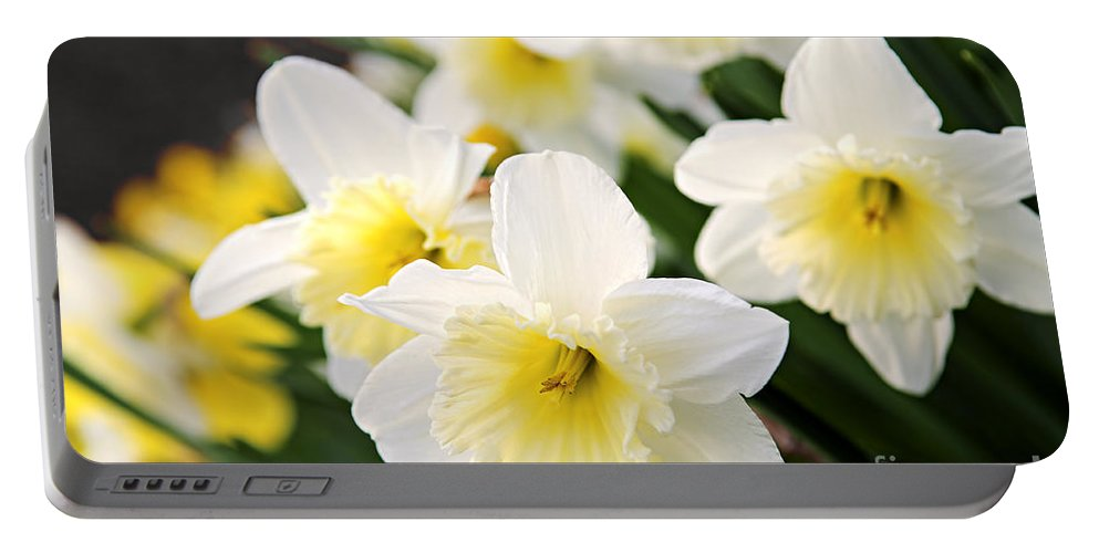 Daffodil Portable Battery Charger featuring the photograph Spring Daffodils by Elena Elisseeva