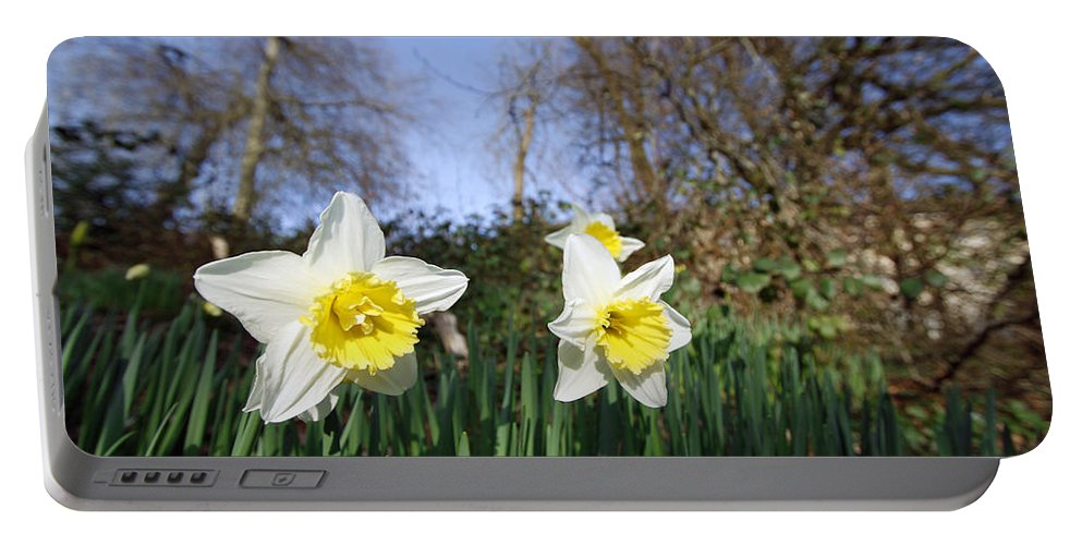 Plants Portable Battery Charger featuring the photograph Spring Daffodils by Steve Ball