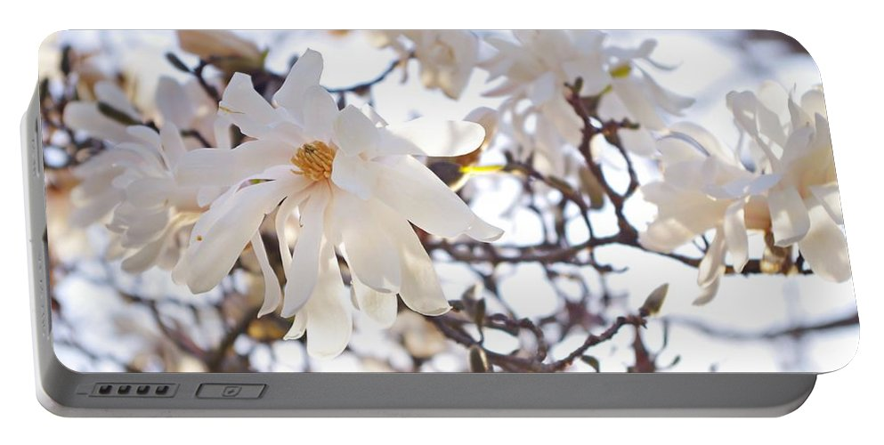 Magnolia Stellata Portable Battery Charger featuring the photograph Spring Flowers by Sharon Popek