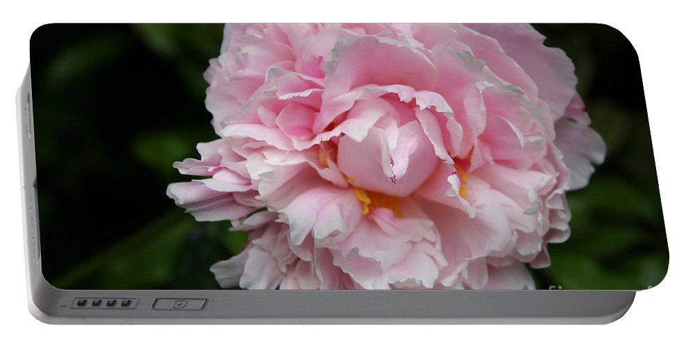 Peony Portable Battery Charger featuring the photograph Spring In Pink by Christiane Schulze Art And Photography