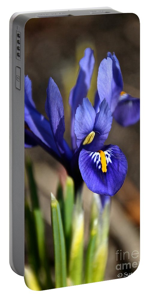 Flower Portable Battery Charger featuring the photograph Spring Iris by Susan Herber