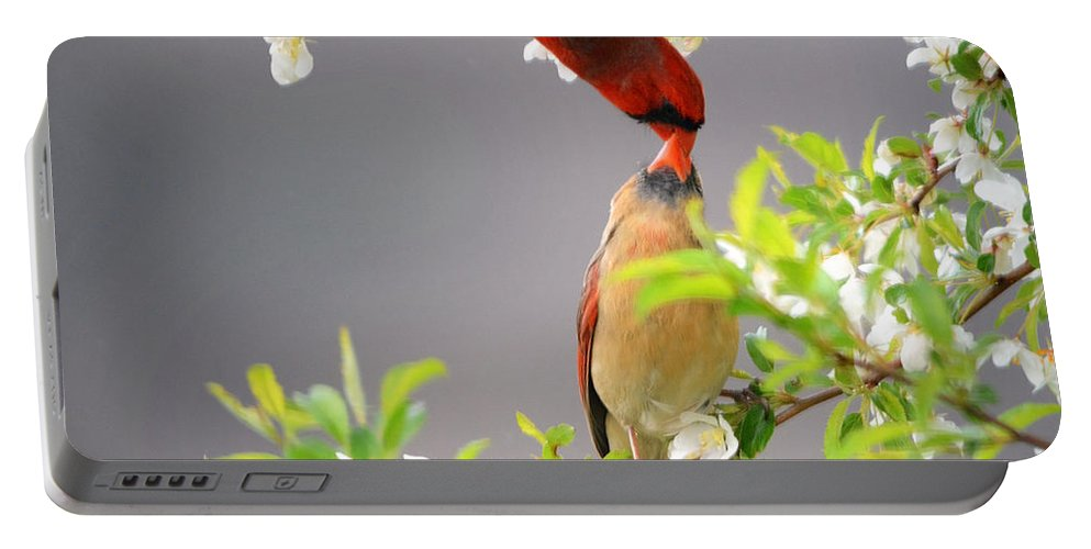 Nature Portable Battery Charger featuring the photograph Cardinal Spring Love by Nava Thompson