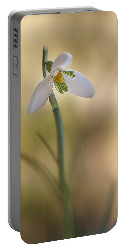 Flower Portable Battery Charger featuring the photograph Spring Messenger by Annie Snel
