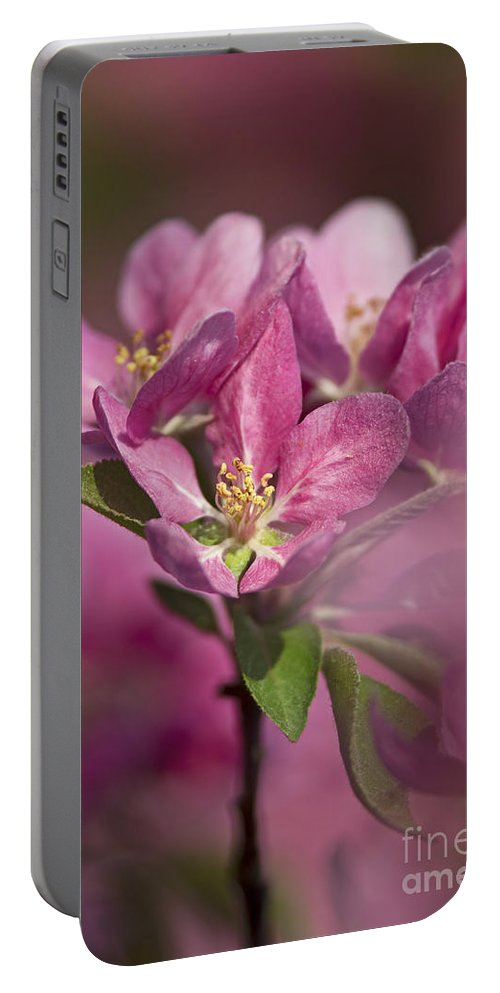 Nina Stavlund Portable Battery Charger featuring the photograph Spring Pink... by Nina Stavlund