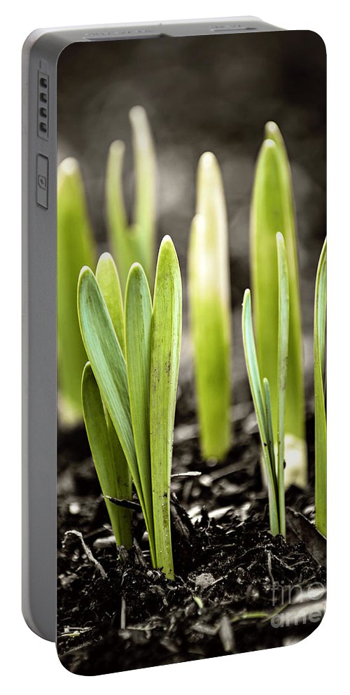 Spring Portable Battery Charger featuring the photograph Spring Shoots by Elena Elisseeva