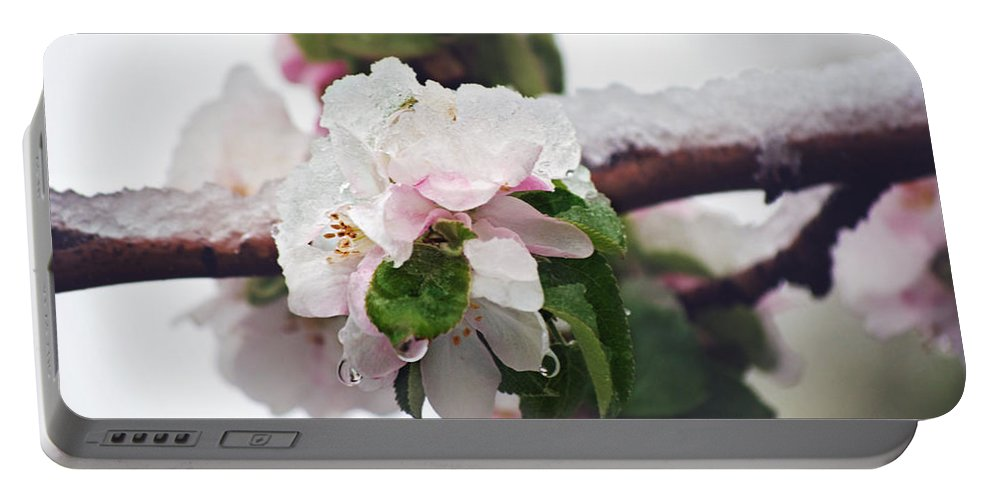 Apple Blossoms Portable Battery Charger featuring the photograph Spring Snow On Apple Blossoms by Lisa Knechtel