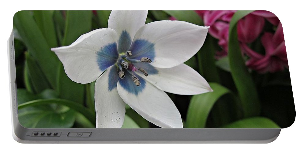 White Flower Portable Battery Charger featuring the photograph Spring Star by MTBobbins Photography