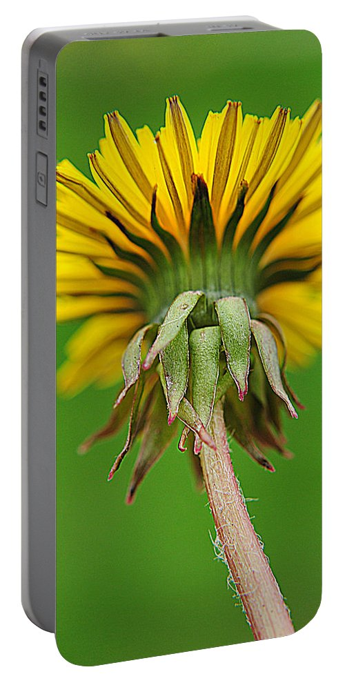 Spring Portable Battery Charger featuring the photograph Spring To Life by Frozen in Time Fine Art Photography