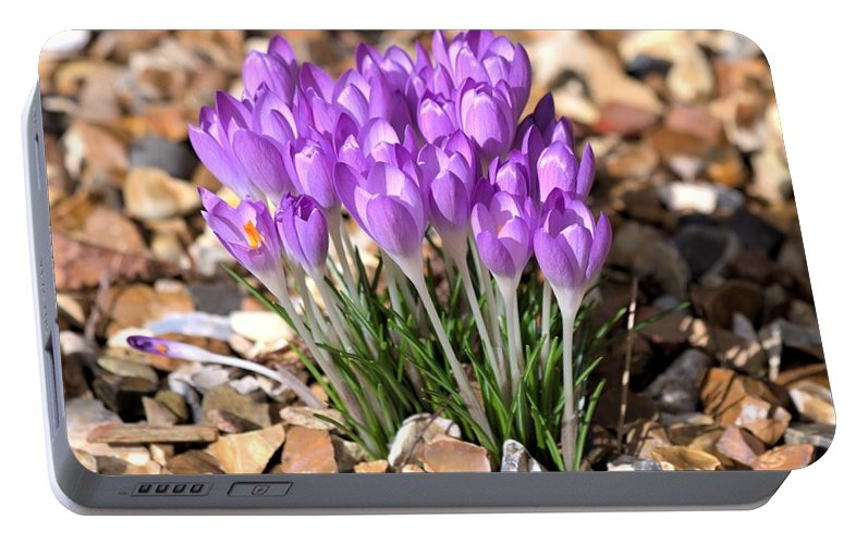 Spring Flowers Portable Battery Charger featuring the photograph Springflowers by Gordon Auld