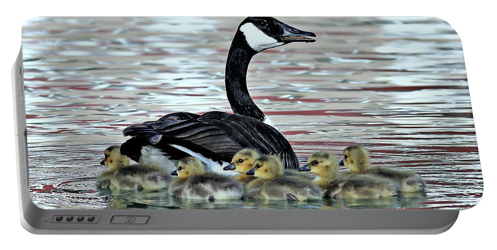 Canada Goose Portable Battery Charger featuring the photograph Spring's First Goslings by Elizabeth Winter