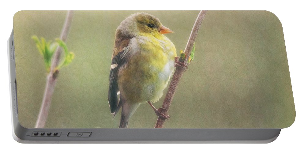 Goldfinch Portable Battery Charger featuring the photograph Springtime Goldfinch by Susan Capuano