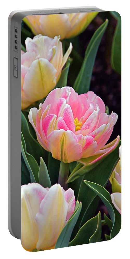 Parrot Tulips Portable Battery Charger featuring the photograph Springtime Sprites -- Parrot Tulips by Byron Varvarigos