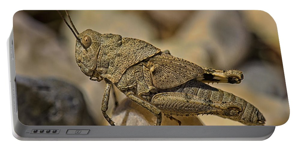 Insect Portable Battery Charger featuring the photograph Spur-throated Grasshopper by Linda Tiepelman