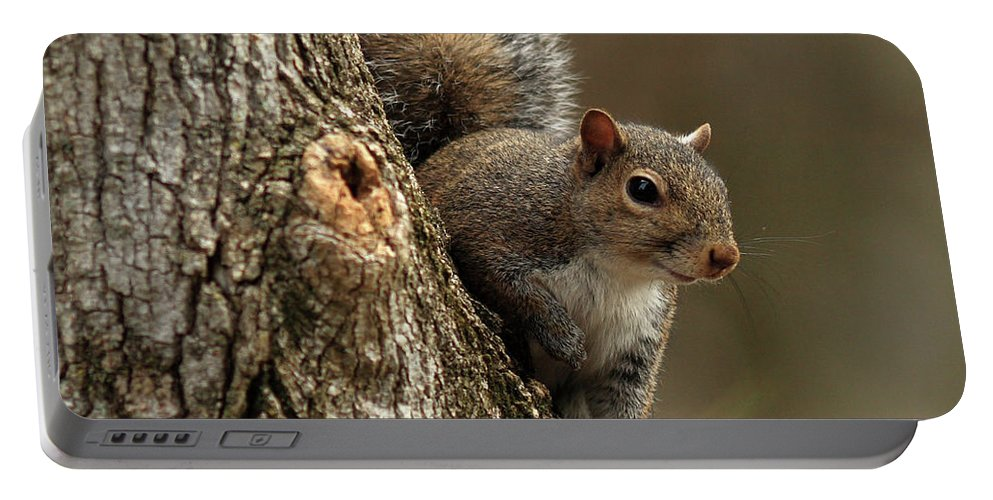 Squirrel Portable Battery Charger featuring the photograph Squirrel by Douglas Stucky