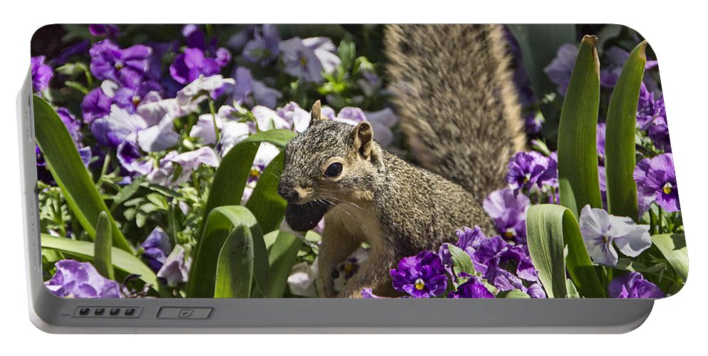 Squirrel Portable Battery Charger featuring the photograph Squirrel In The Botanic Garden-dallas Arboretum V2 by Douglas Barnard