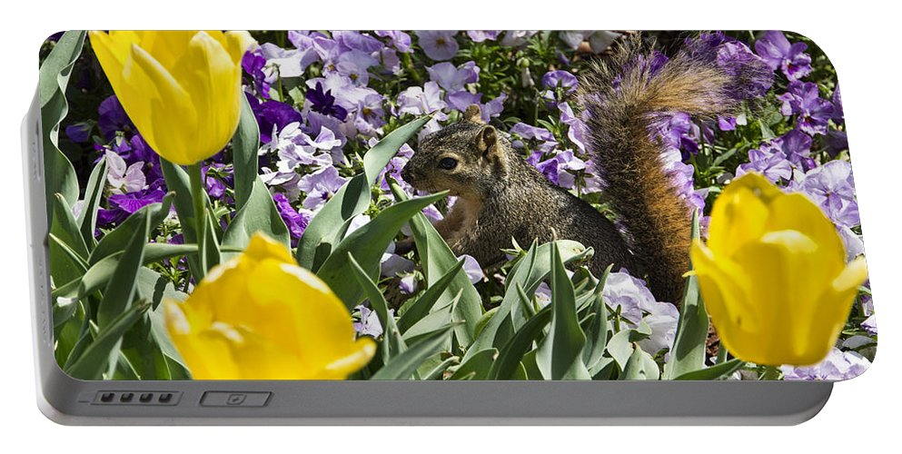 Squirrel Portable Battery Charger featuring the photograph Squirrel In The Botanic Garden-dallas Arboretum V3 by Douglas Barnard