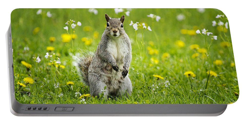 Animal Portable Battery Charger featuring the photograph Squirrel Patrol by Christina Rollo
