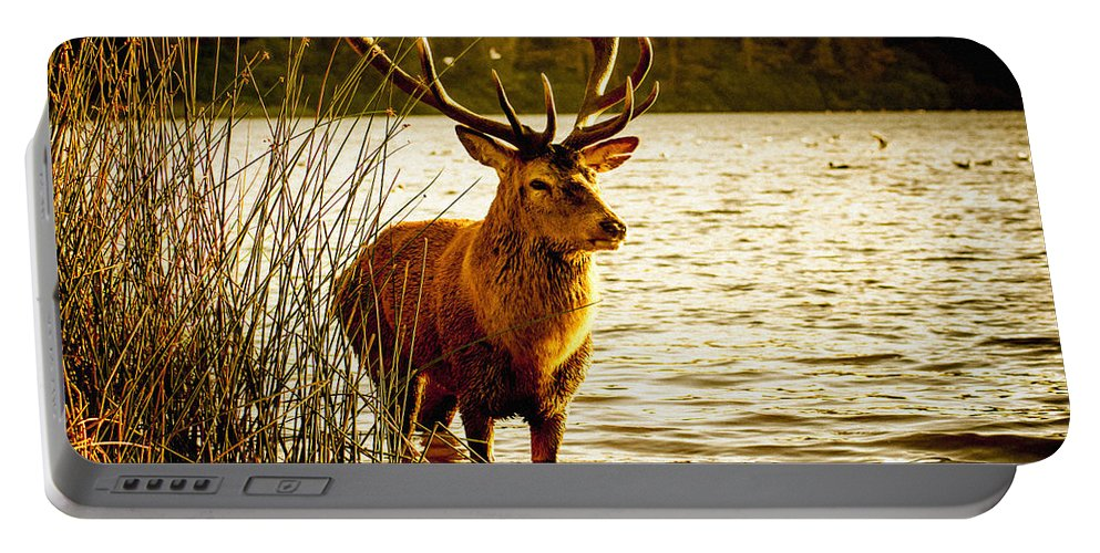 Britain Portable Battery Charger featuring the photograph Stag by Bailey Cooper