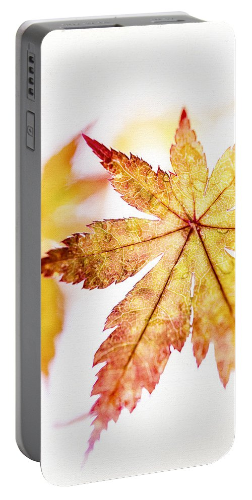Autumn Leaves Portable Battery Charger featuring the photograph Stained Glass by Caitlyn Grasso