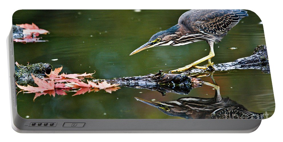 Green Heron Portable Battery Charger featuring the photograph Stalking Reflection by Cheryl Baxter