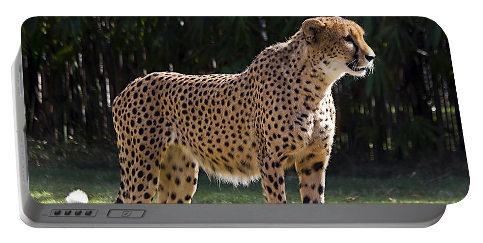 Tigers Portable Battery Charger featuring the photograph Stance by Ken Frischkorn