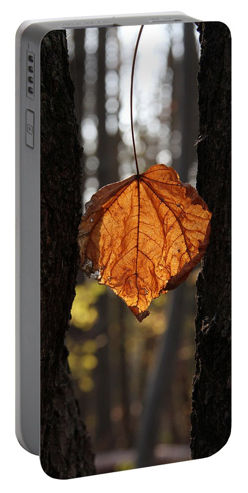 Leaf Portable Battery Charger featuring the photograph Stand By Me by Doris Potter