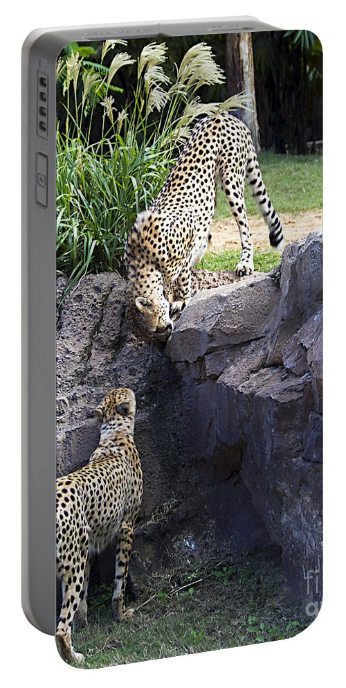 Tigers Portable Battery Charger featuring the photograph Stand Off by Ken Frischkorn