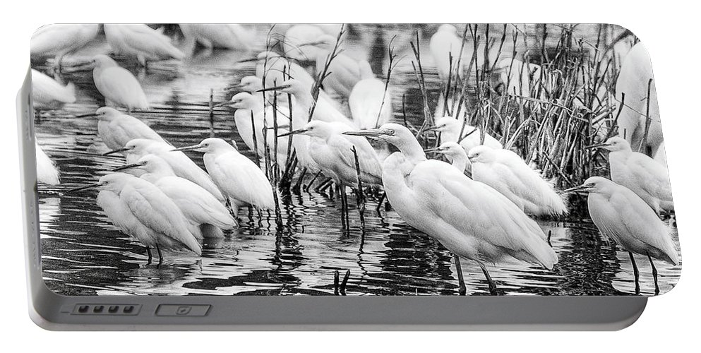 Birds Portable Battery Charger featuring the photograph Standing Strong by Scott Hansen