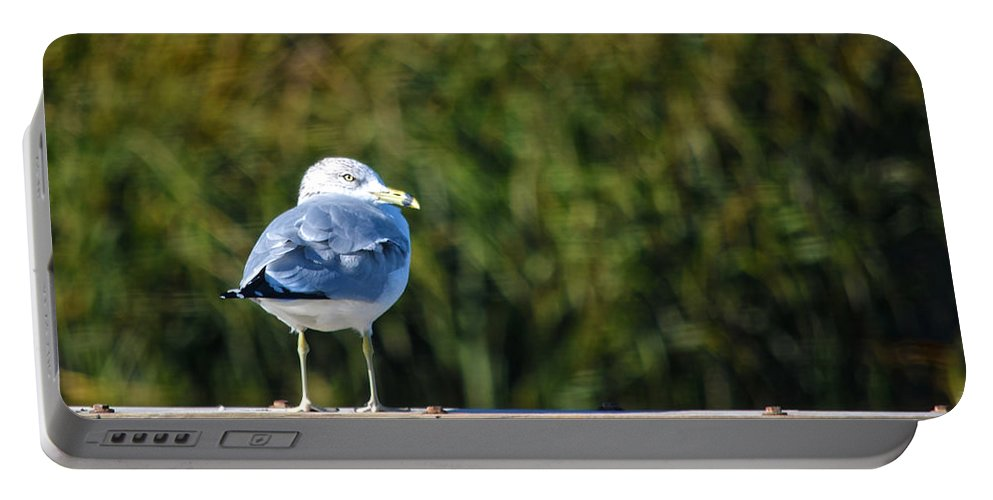 Seagull Portable Battery Charger featuring the photograph Standing Watch by Sandi OReilly