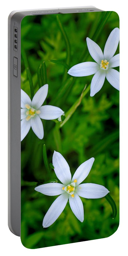 Star Of Bethlehem Portable Battery Charger featuring the photograph Star Of Bethlehem Trio by Carolyn Derstine