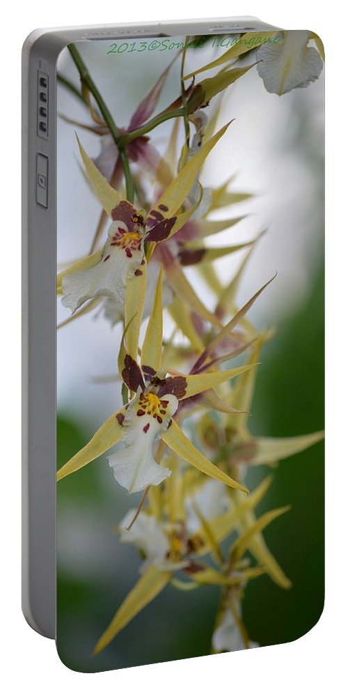 Anniversary Flower Portable Battery Charger featuring the photograph Star Orchids by Sonali Gangane