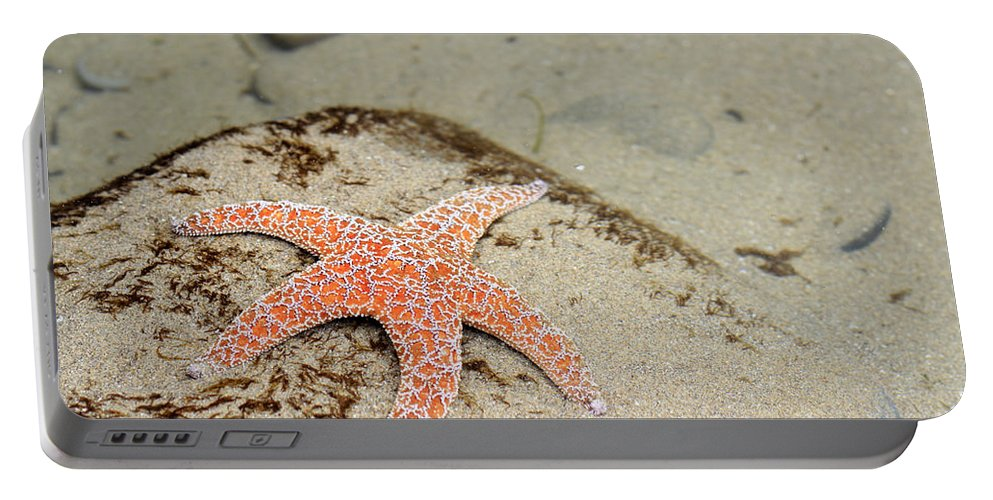 Starfish Portable Battery Charger featuring the photograph Starfish Underwater by Lee Serenethos