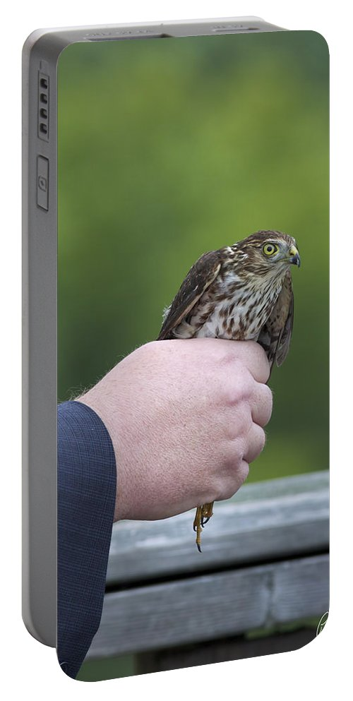 Accipiter Striatus Portable Battery Charger featuring the photograph Staring Back by Phill Doherty