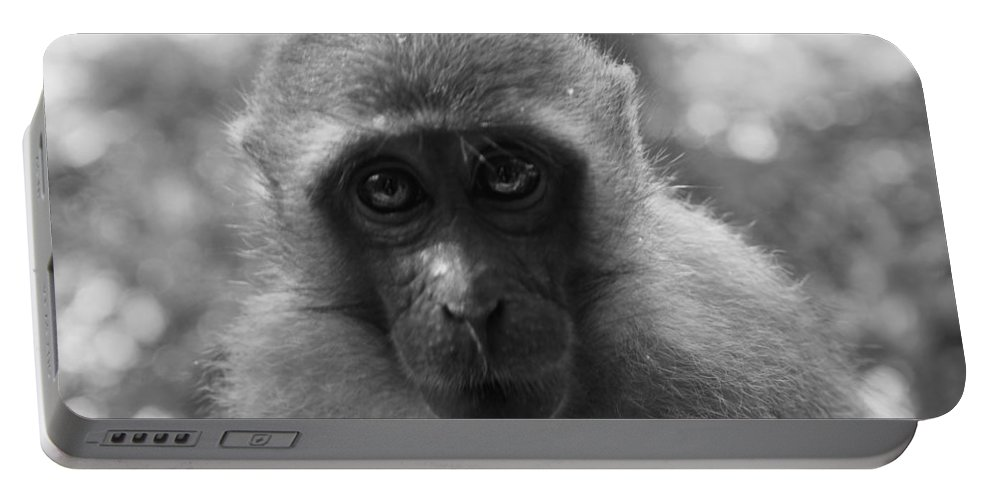 Monkey Portable Battery Charger featuring the photograph Staring Macau by Kaleidoscopik Photography