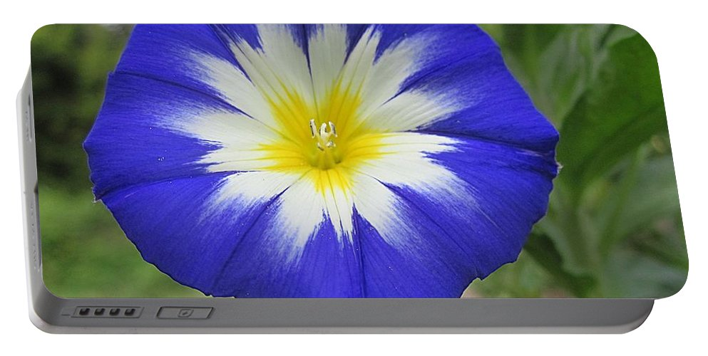 Bush Morning Glory Portable Battery Charger featuring the photograph Starry Blue Enchantment by MTBobbins Photography