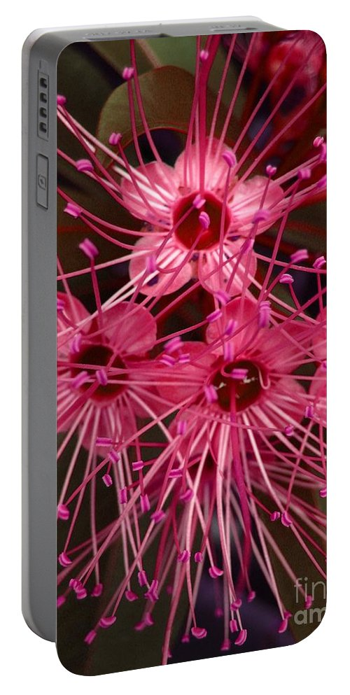 Flower Portable Battery Charger featuring the photograph Stars by Michelle Meenawong
