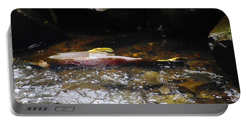 Wildlife Portable Battery Charger featuring the photograph Steelhead Resting In The Shallows by Jeff Swan