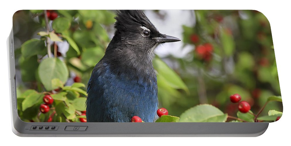 Bird Portable Battery Charger featuring the photograph Steller's Jay And Red Berries by Teresa Zieba