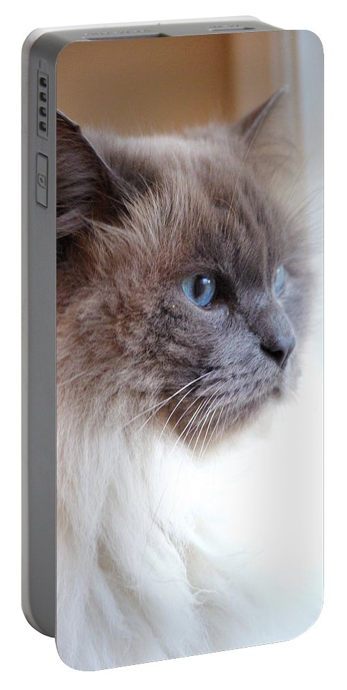 Cat Portable Battery Charger featuring the photograph Still Waiting by Cindy Johnston