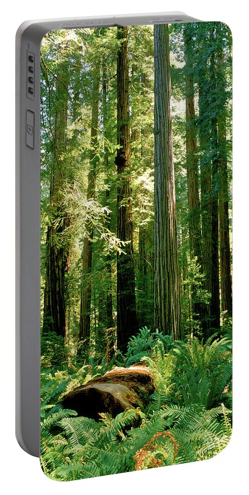 Coast Portable Battery Charger featuring the photograph Stout Grove Coastal Redwoods by Ed Riche