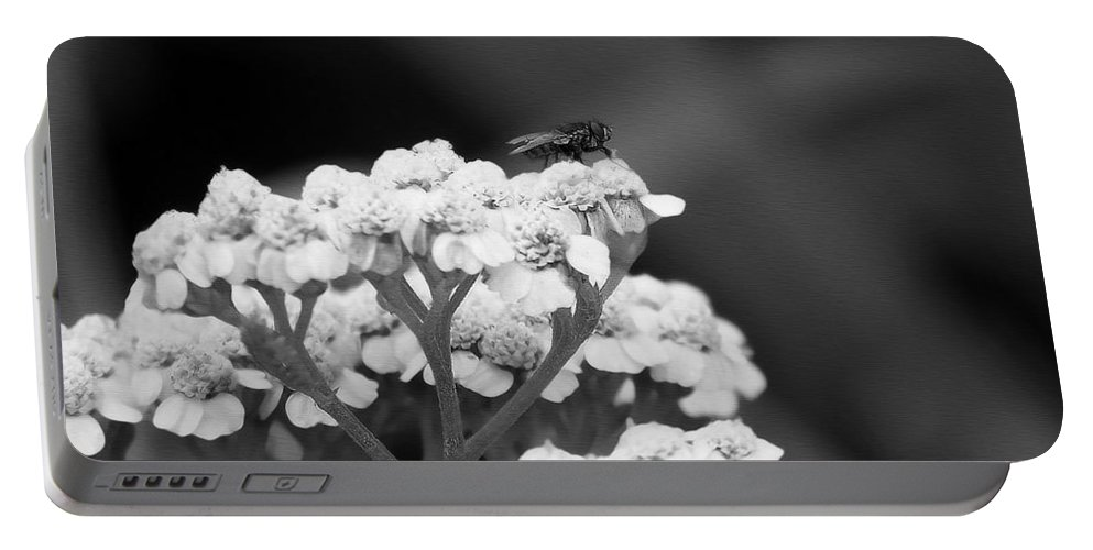 Fly Portable Battery Charger featuring the photograph Strange Beauty by Marysue Ryan