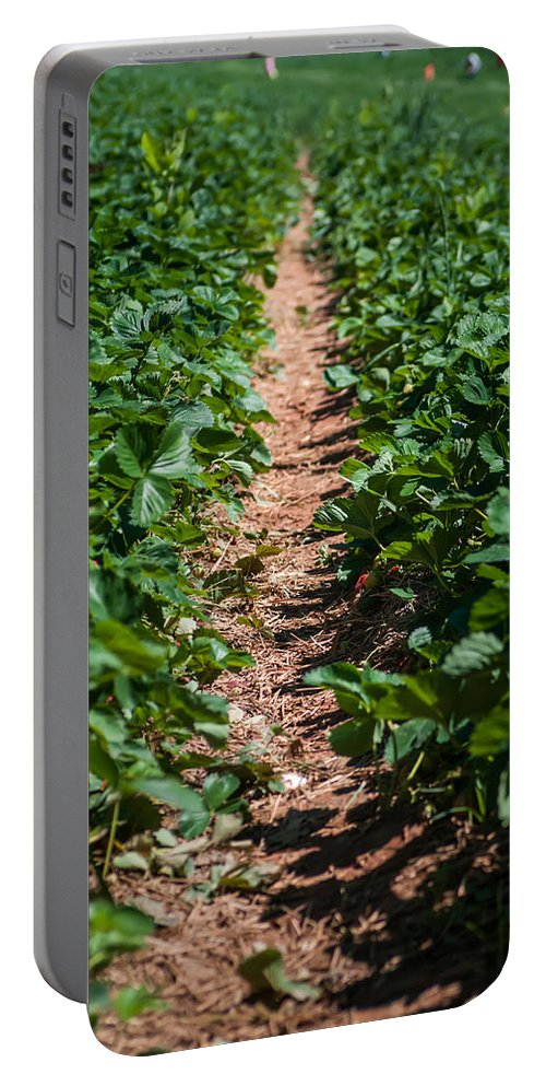 Agricultural Portable Battery Charger featuring the photograph Strawberry Farm Field by Alex Grichenko