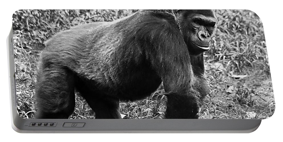 Chimpanzee Portable Battery Charger featuring the photograph Strength by Ken Frischkorn