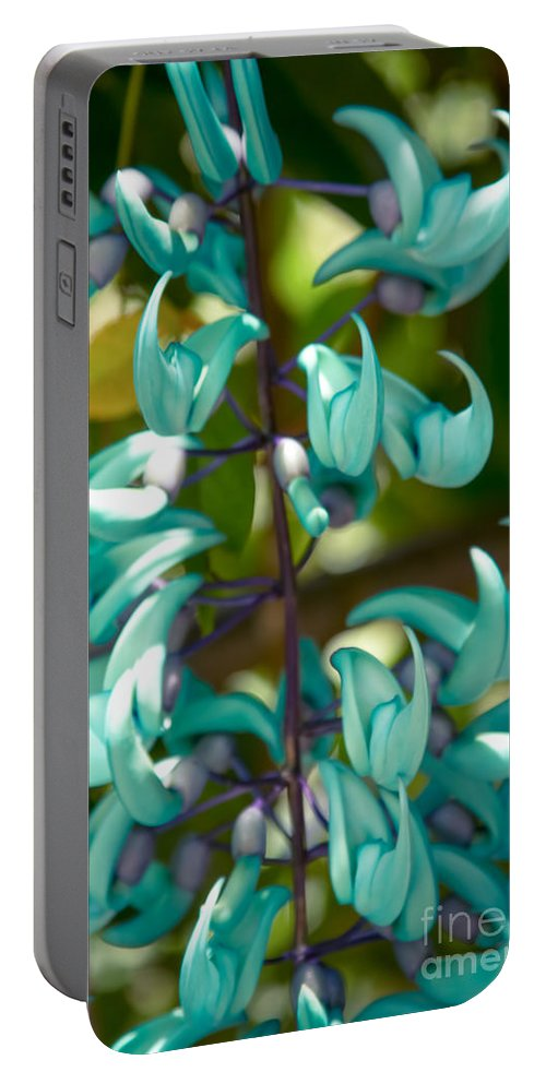 Blue Jade Vine Portable Battery Charger featuring the photograph Strongylodon Macrobotrys - Blue Jade Vine - Hawaii by Sharon Mau