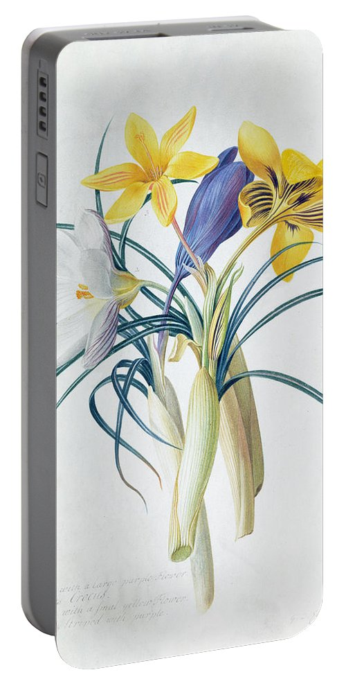 Floral Portable Battery Charger featuring the painting Study Of Four Species Of Crocus by Georg Dionysius Ehret