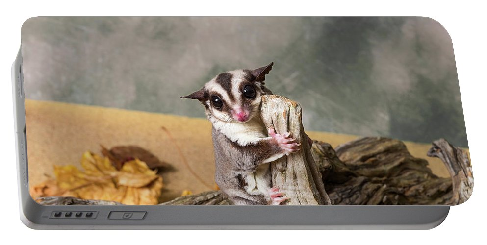 Photography Portable Battery Charger featuring the photograph Sugar Glider Petaurus Breviceps by Panoramic Images